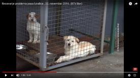 01. Fotke kaveza od 22.11.2016. godine (2)